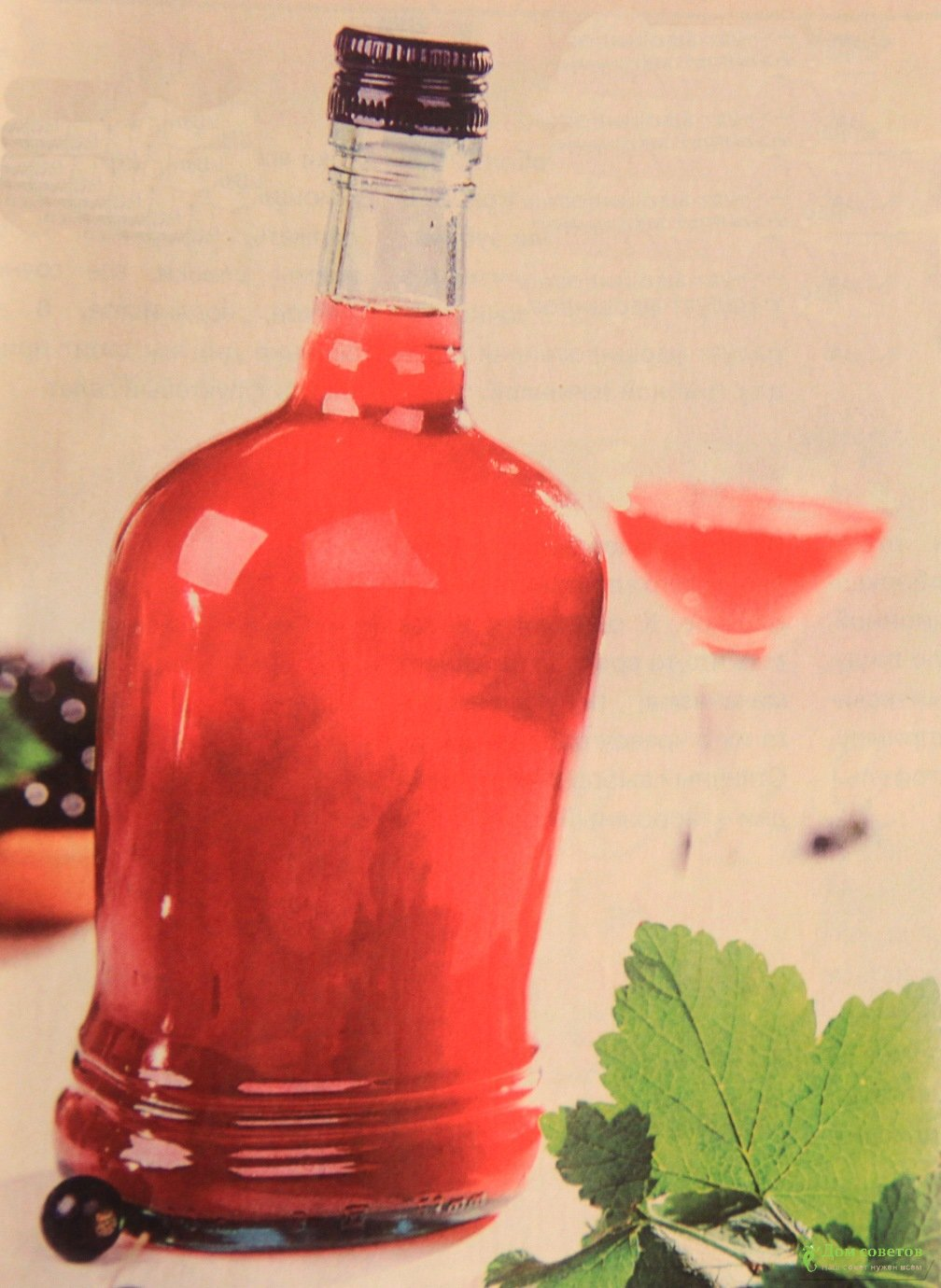 Клюковка настойка из клюквы. Клюква на спирту, водке, самогоне 1